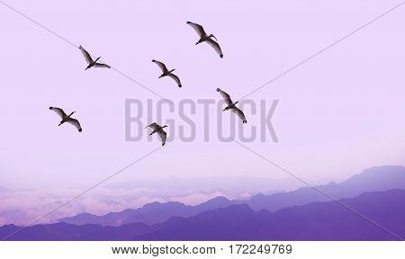 Spring or autumn migration over purple landscape