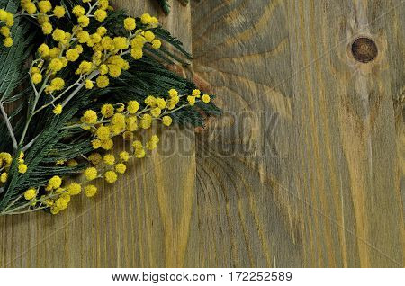 Spring background - mimosa spring flowers on the dark wooden surface. Spring still life with free space for text. Spring concept with spring mimosa flowers
