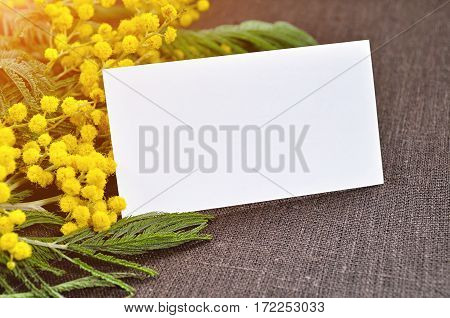 8 March background - white card in the mimosa flowers. 8 March postcard fore 8 March festive text. 8 March is international women day