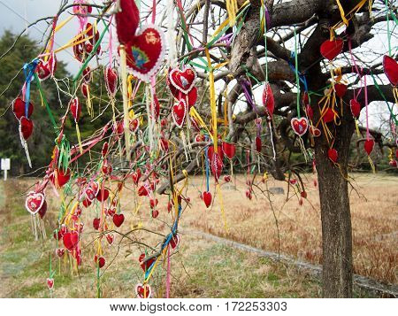 Red hearts hung on a tree using colorful ribbon at Cangshan Mountain in Dali in Yunnan Province of China.