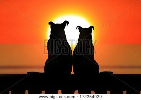 Couple of jack russell dogs looking to the horizon at sunset.