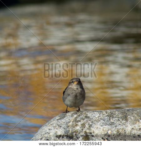 Sparrows On A Rock Near The Water