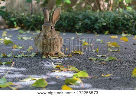 A cute little bunny rabbit sitting as pretty as you please posing like a champ.