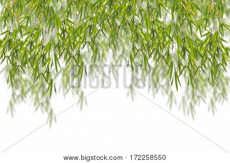 Green bamboo leaf for design and background