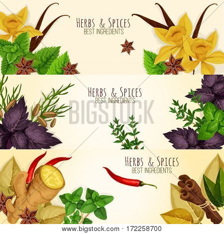 Spicy herbs, herbal seasonings and spice condiments vector banners of anise and oregano, basil, dill and parsley, ginger, chili pepper, rosemary, thyme, sage, vanilla, mint, cinnamon and tarragon