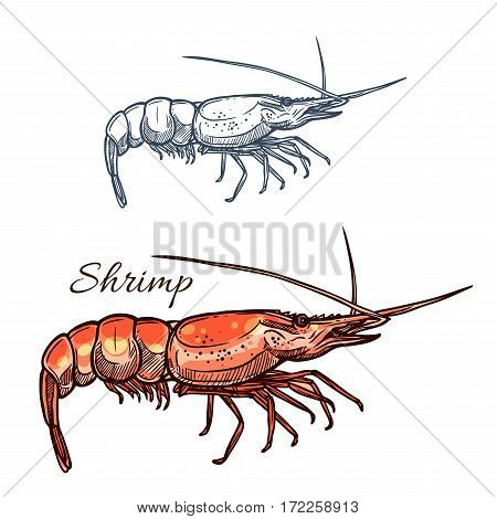 Shrimp sketch vector icon. Prawn seafood and marine ocean shellfish or crustacean mollusk. For restaurant sign or emblem, fishing sport club or industry, sea food and fish market or shop