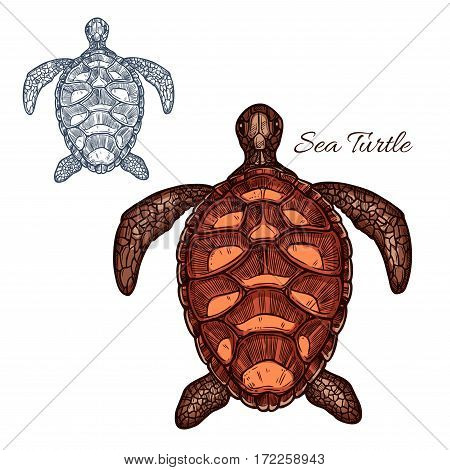 Turtle vector icon of marine sea or ocean reptile tortoise or terrapin with carapace bony or cartilaginous shell. Isolated turtle with detailed shell pattern for zoo, pet shop emblem or zoology symbol