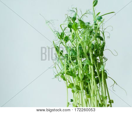 green pea sprouts