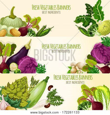 Vegetable banners of fresh organic veggies cabbage and romanesco , kohlrabi and beet, eggplant, zucchini, radish and mushrooms, arugula, pea and garlic, potato. Vegetarian farm food harvest