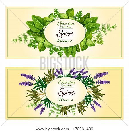 Spicy garden herbs or herbal seasonings and spices vector banners of lavender and sorrel, savory, tarragon, parsley or thyme, cilantro, basil and dill, oregano, rosemary and sage, mint and bay leaf