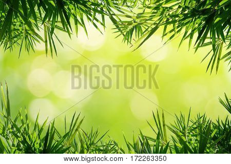 Bamboo leaves frame on blurred green natural background