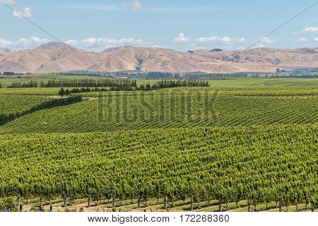 aerial view of New Zealand vineyards in summertime