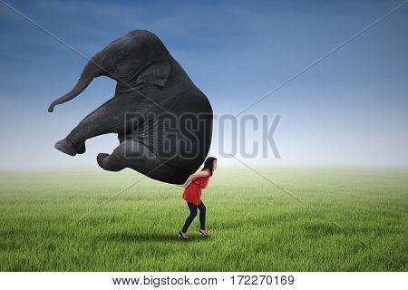 Beautiful woman lifting heavy elephant on the green field