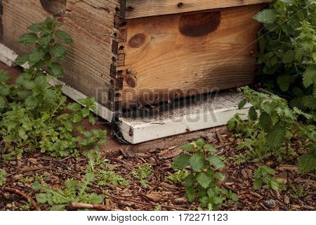 Stacks Of Langsroth Bee Hives