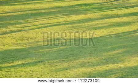 Abstract Background Of Tree Shadow On Grass Field