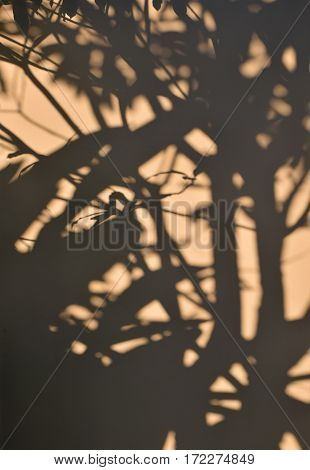 Tree Shadow On The Yellow Concrete Wall Background