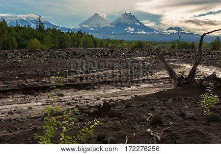 View of the volcanoes: Klyuchevskaya Sopka, Bezymianny, Kamen from river Studenaya at dawn. Kamchatka Peninsula.