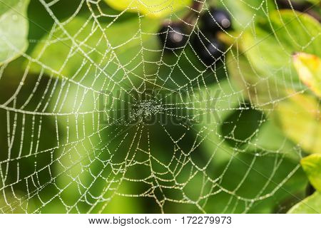 spider web with morning dew close up