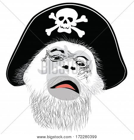 Monkey head in a pirate hat with a skull and crossbones -vector illustration