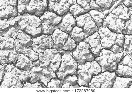 Closeup of Gray cracked soil background texture