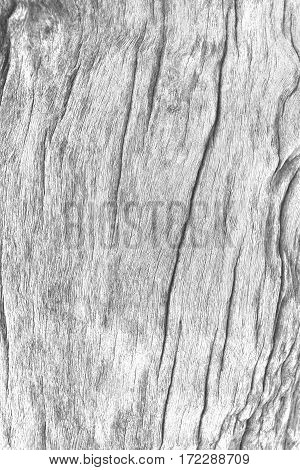 Closeup of white grey wood texture. background