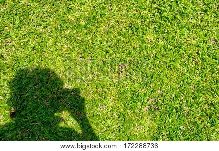 Man Shadow With Take A Photo Action On Green Grass