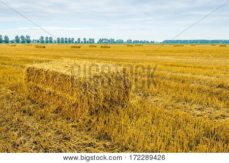 Straw bale in front of a large stubble field in a cloudy day in the summer season.