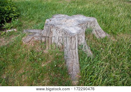 Dry stump in a heart shape on a green grass