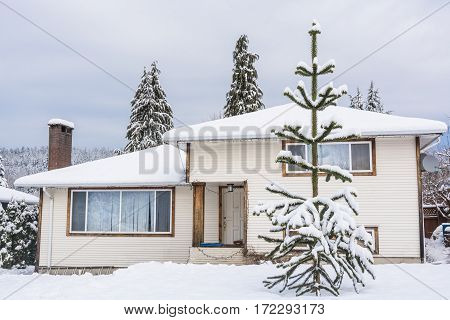 Family house with monkey tree on the front yard in snow. Residential house on winter cloudy day