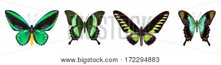 Set of four green beautiful butterflies isolated on white.