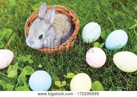 Little Easter bunny sitting in a wicker basket with eggs on the spring meadow