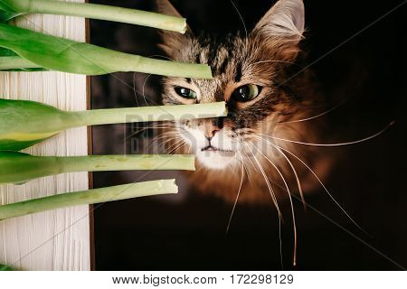Cat Smelling Green Plant, With Big Whiskers. Beautiful Cat With Funny Emotions And Amazing Eyes Look
