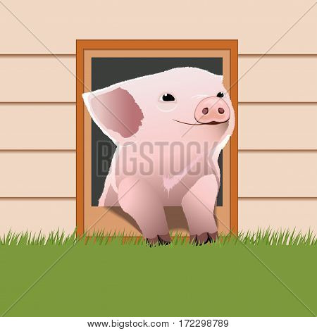 Piglet come out from the pet door. Cute piglet. Happy pig face. Cartoon character. Vector illustration