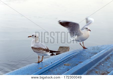 Seagulls are landing on a blue boat