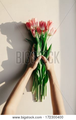 Hands Holding Pink Tulips In Morning Soft Light On White Rustic Wall Near Window In Home Background.