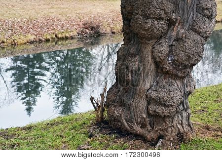 Part of a tree trunk and small stream in the background