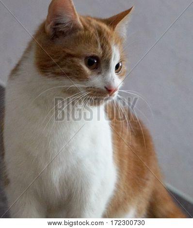 beautiful cat with big eyes watching pet