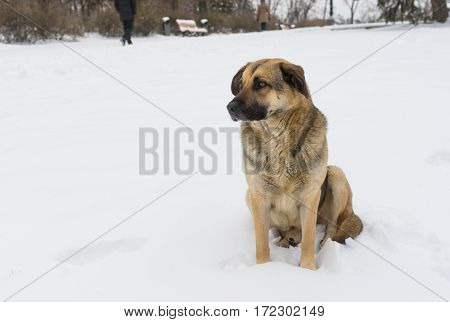 Portrait of mixed breed stray dog on a winter street