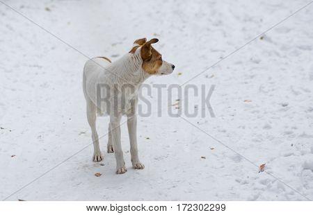 Outdoor portrait of cute stray dog standing on a snow
