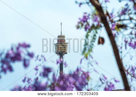 Blooming Jacaranda Flowers With Sydney Tower On The Background