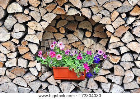 Petunia On Log Stack