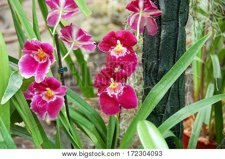 Lilac Orchid Flower