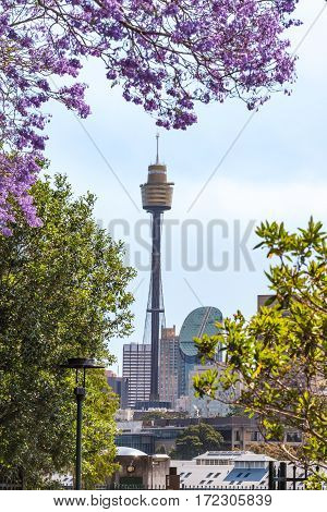 Sydney Skyline Framed By Blooming Jacaranda Trees