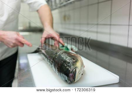 Chef in restaurant kitchen filleting carp fish