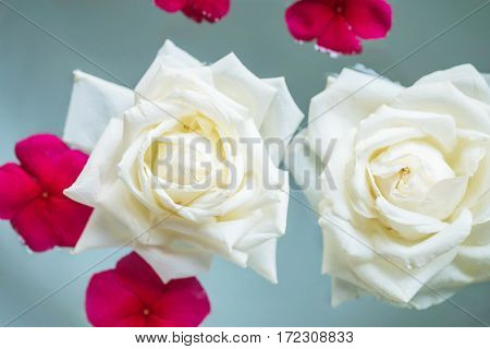 Closeup group of white rose flower float on water in basin for decoration in the garden textured background