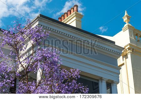Blooming Jacaranda Trees With Art Deco Building On The Background