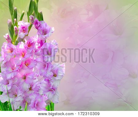 Beautiful floral border with pink Gladiolus Flowers Bouquet close up and copy space for text. Can be used as greeting card print on fabrics for bed linen packaging for the vase