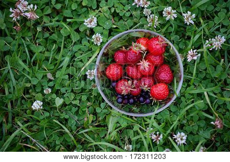 Bowl with red strawberries on a background of green clover