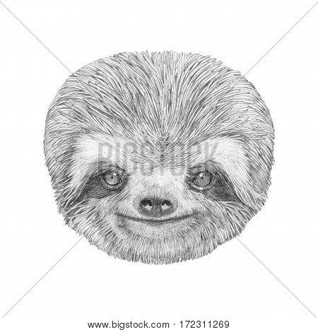 Portrait of Sloth. Han drawn illustration. Animal.