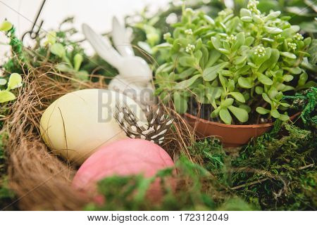 Close-up view of fresh plant in pot and colorful Easter eggs